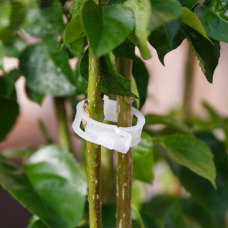 10pcs Garden Plant Support Garter Tomato Vine Stalks Garter Grow Upright Tomato Plant Clips Agriculture Support Tools H1Z2