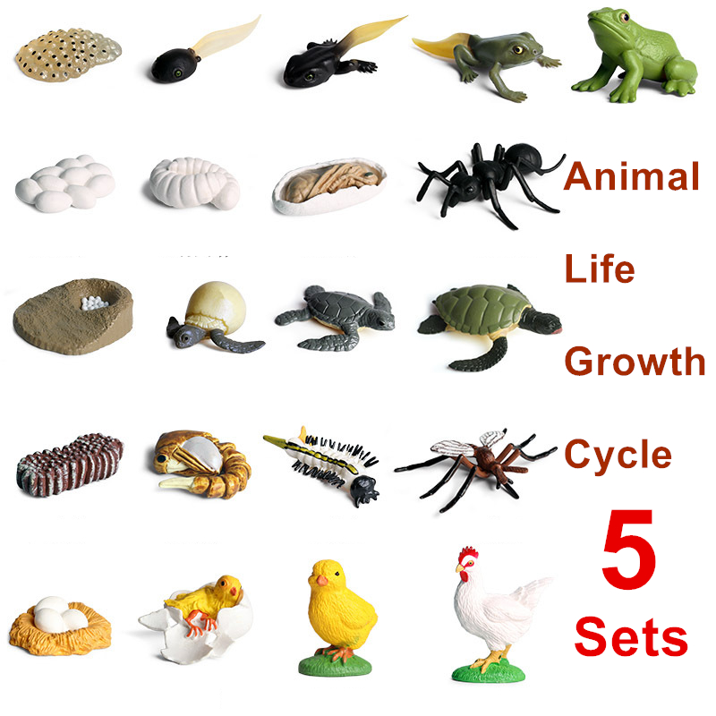 5 Sets Simulation Insects Animals Life Growth Cycle Model Mini Size Frog Chicken Turtle Ant Biology Education Toys For Kids Gift
