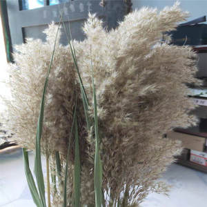 Pampas Grass Christmas-Decorations Dried Wedding-Flower Bunch Real-Reed-Plants Natural