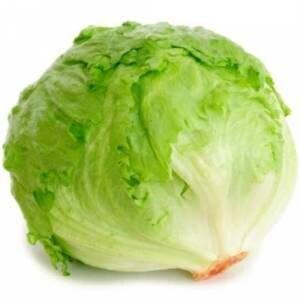 25 Pieces Organic Aysberk Lettuce Free Shipping