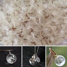 Real dandelion semente para diy jóias fazendo recheios resina desejo seco pressionado flor brincos colar jóias fazendo
