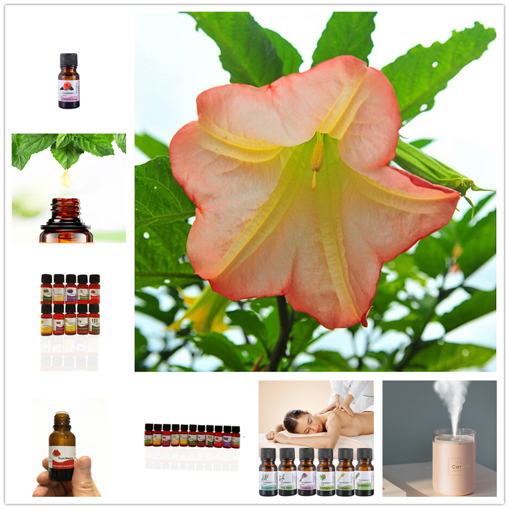 New 10ML Essential Oil Camellia Petelotii Peony,Sunflower,crown of Thorns Aromatherapy Diffuser Massage Spa Essential Oil
