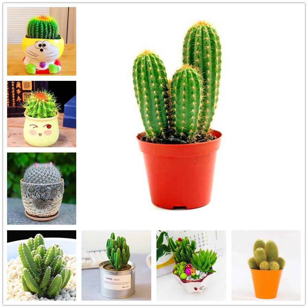 Plant Bath Salts Mini Desert Cactus Essence ZWPZ-12 130Pcs