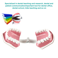 Adult Dental Teeth Model and Toothbrush with Removable High Grade Teeth Teaching Model for Kids Oral Care Teaching Teeth Model