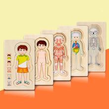Wooden Montessori Educational Toys Boys Girls Human Body Structure Five Layers Puzzle Preschool Children Tangram Jigsaw Board