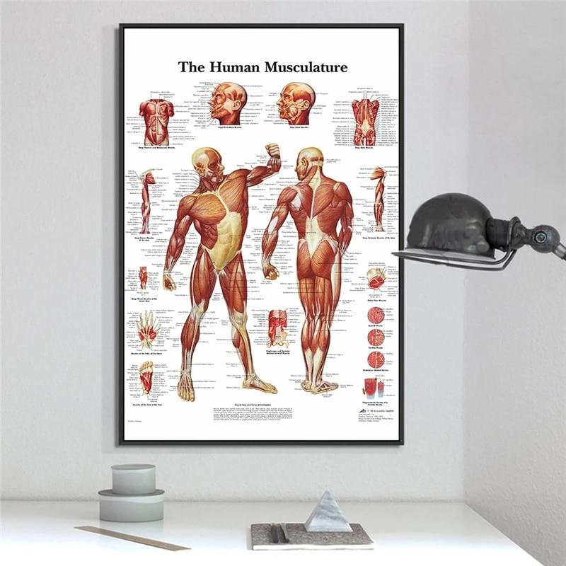 Anatomie humaine Muscles système Art affiche imprimer corps carte toile mur photos pour Science médecine chambre décor |