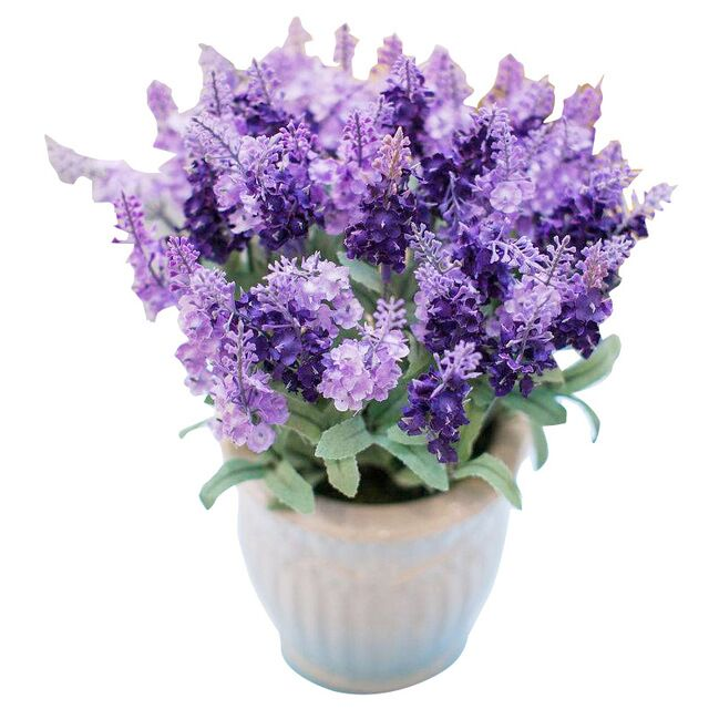 500 Seeds Lavender Seeds Four Season Sowing Potted Lavender Herb Seed Flower Seed Flower Seed Flower Flower Seed