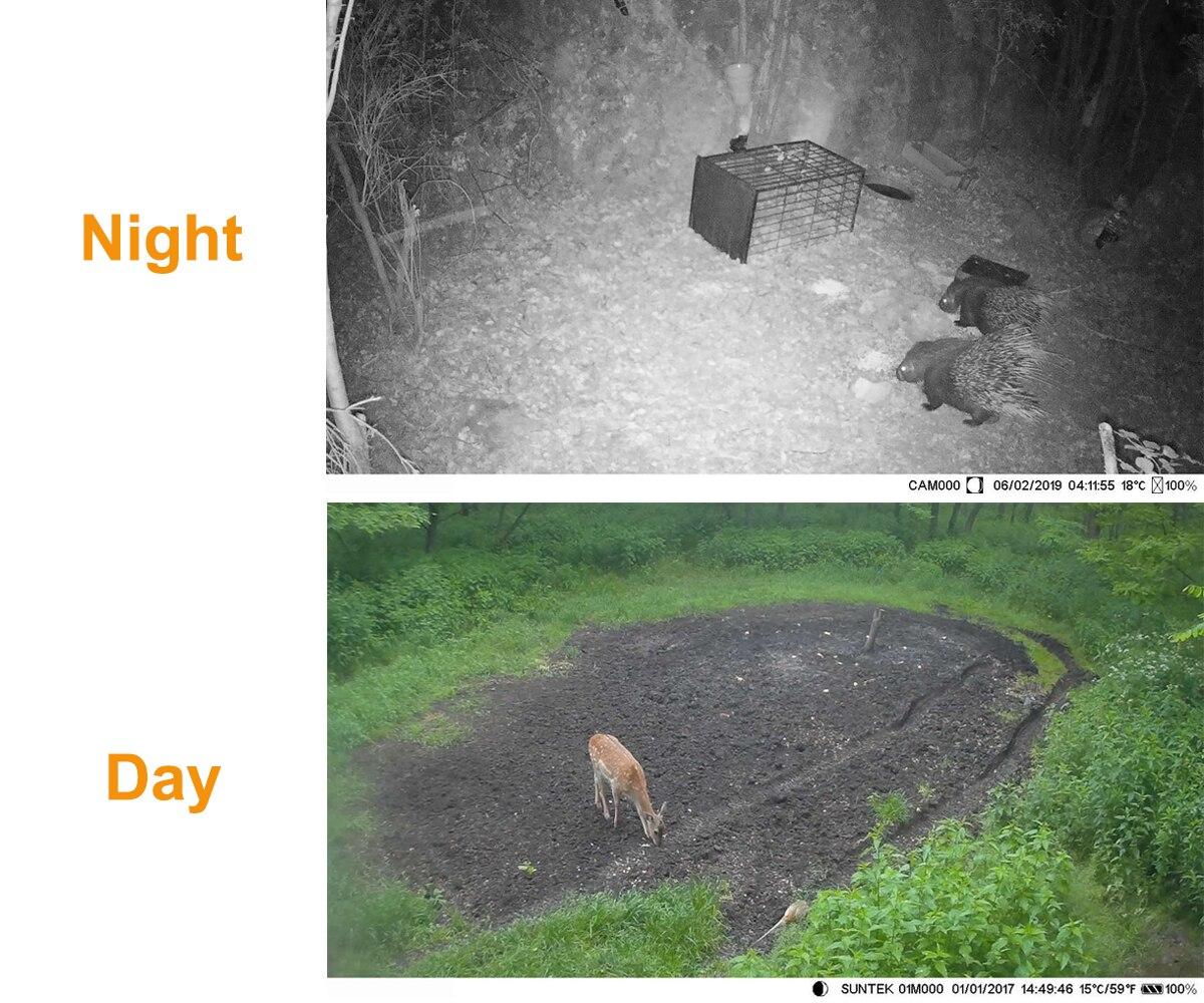 dwireless água visão noturna selvagem câmeras floresta