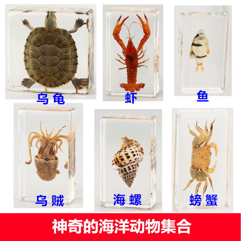Kindergarten Teaching Real Ocean Animal Crab A Squid Resin Specimen Tortoise Octopus Hermit Crab Crayfish