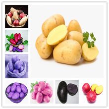 Sale!200 pcs Giant Sweet Potato Bonsai Anti-Wrinkle Nutrition Green Vegetable For Home Garden Planting Rare Potato Garden Plants(China)