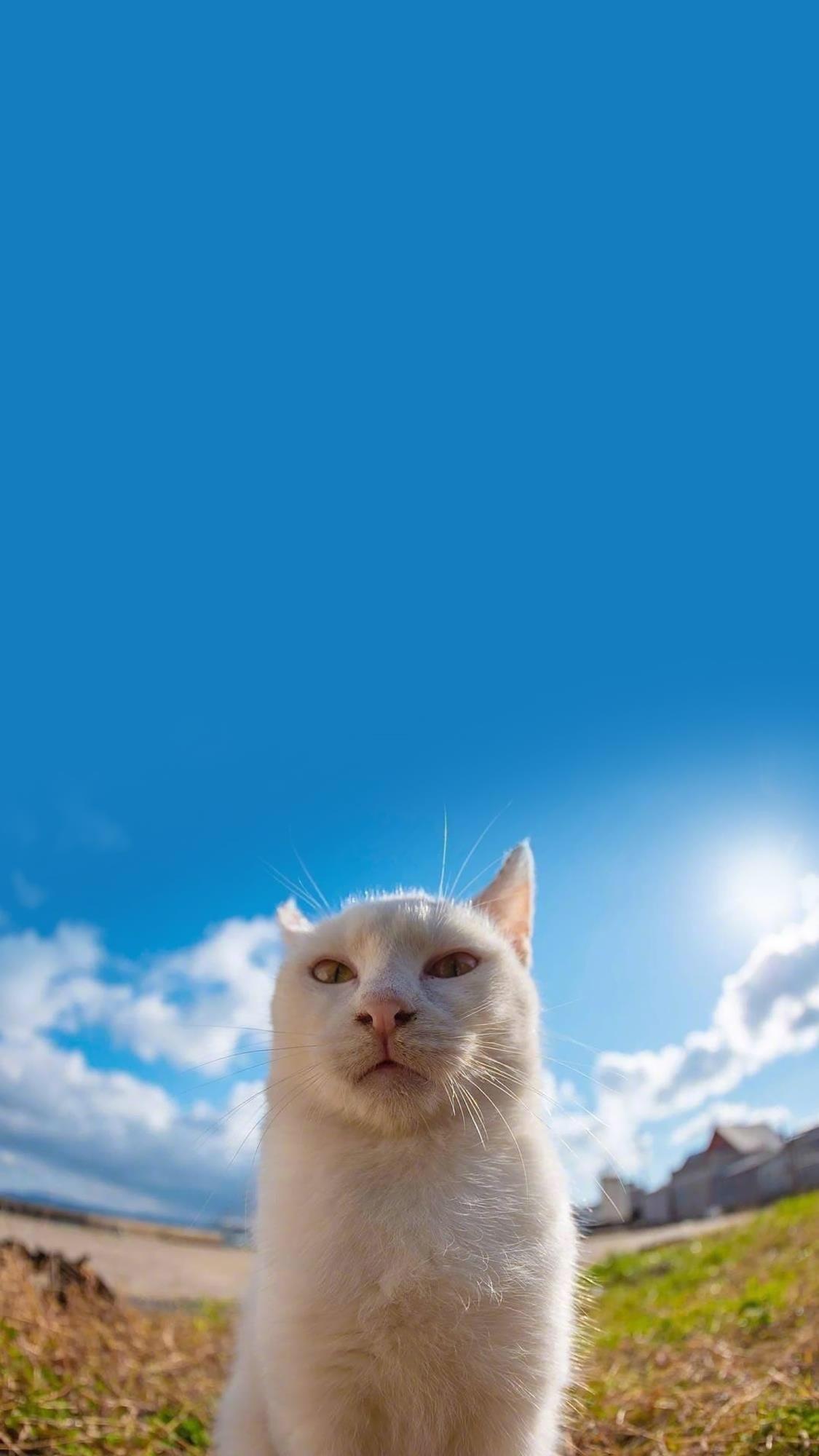 萌猫猫片,霸气喵星人:谁敢挡道?插图3