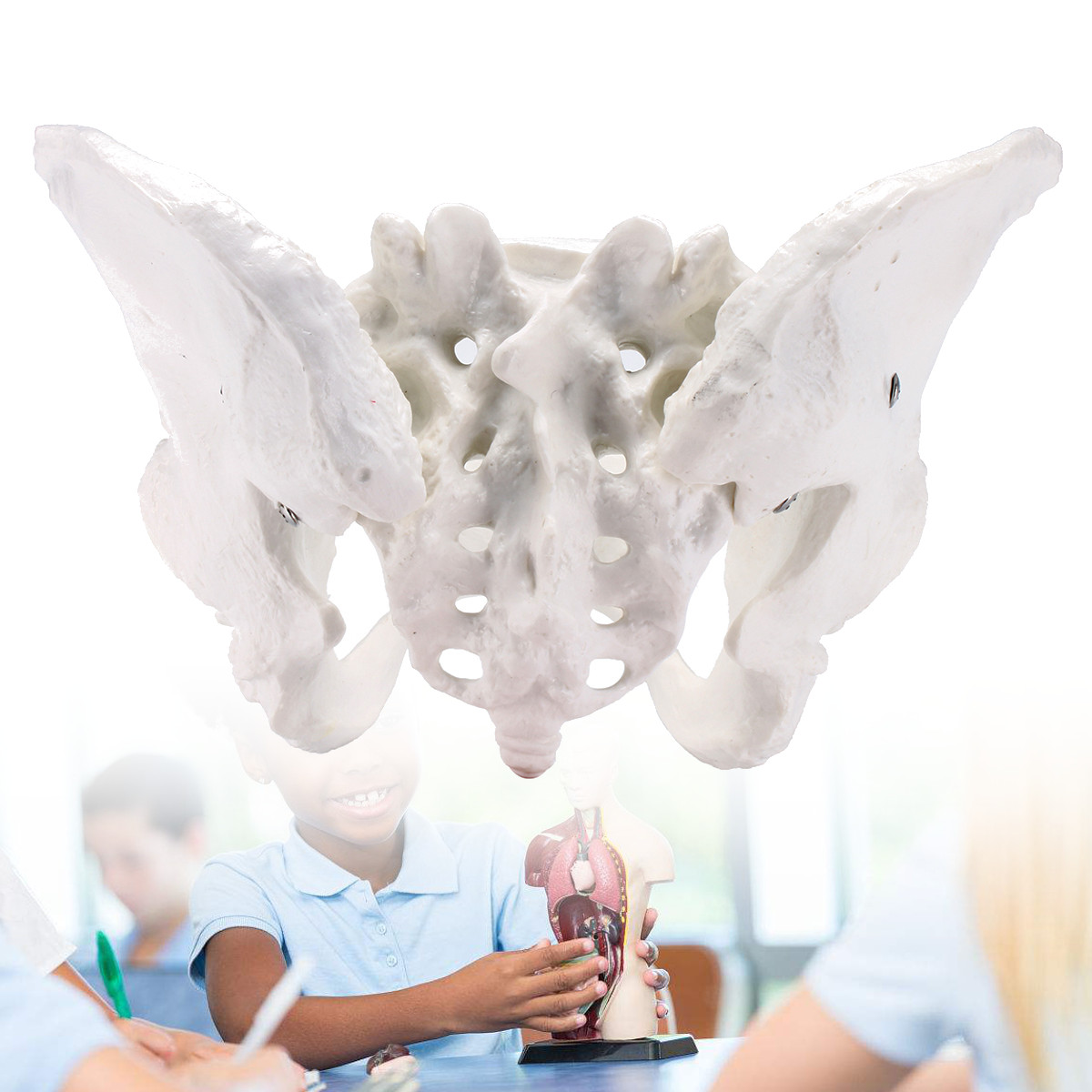 Human Anatomy Model Female Anatomical Pelvis Model Skeleton Anatomical Anatomy Pelvic Model Medical Science Education Supplies