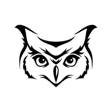 Compare Prices On Elf Owl Shop The Best Value Of Elf Owl From