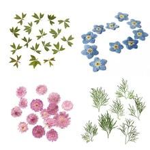 Lot de 10 feuilles de fleurs séchées pressées, marque-page pour Album, bricolage, 4 Types