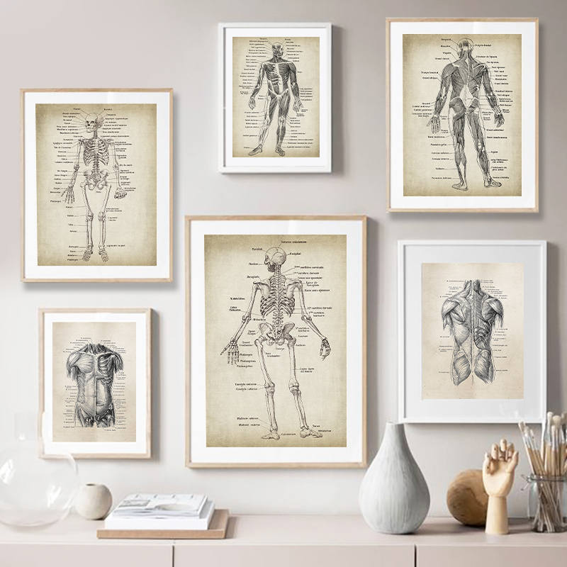 Vintage Medical Prints Doctor's Wall Decor
