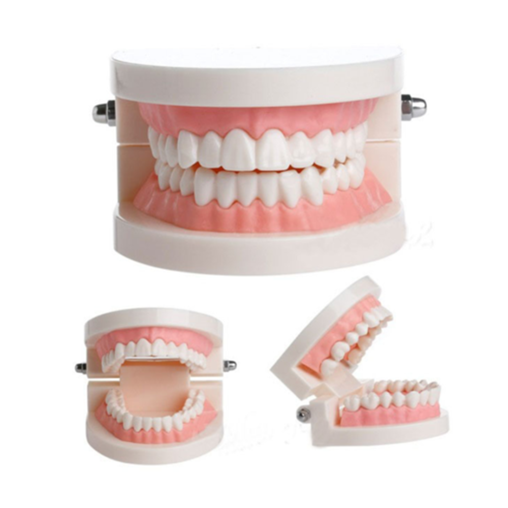 Oral Care Dental Mold Brushing Teaching Model Dental Study Teaching Teeth Model Caries Tooth Care Education Dentist Equipment