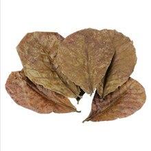 Feuilles naturelles Terminalia Catappa Foetida, 200 pièces/30 pièces, feuilles d'amanterie, traitement de nettoyage des poissons, réservoir, livraison directe