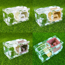 Beautiful Reptile Terrarium Ant Farm Acrylic and Gypsum Ant Breeding Hobby Insect Supplies Unique Gifts