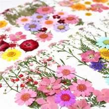 1 шт красочные настоящие сухие цветы растения для лампы в форме