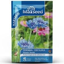 American Heirloom MARSEED Perennial Centaurea Flower  Seedsplants Seedling Garden Outdoor