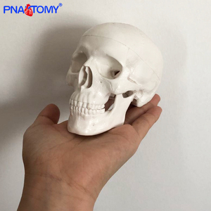 Mini skull model human anatomical head medical model cheap skull anatomy model convenient PVC teaching tool painting sculpt used