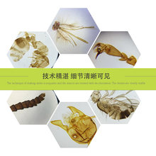 25 шт пластыри для биологического обучения