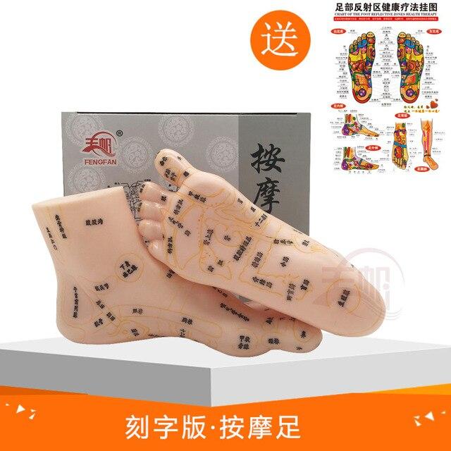 19 سنتيمتر منطقة منعكس القدم تدليك نموذج ، وليس الوخز بالإبر نموذج ، تدليك القدم نموذج اللغة الصينية قدم ريفلكسولوجي ، 1 زوج الطبية