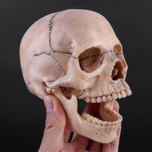 15 pçs/set 4D Desmontado Modelo Anatômico Crânio Destacável Ferramenta de Ensino Médico