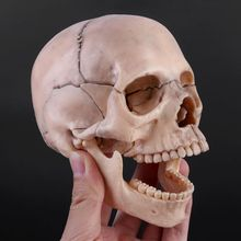 15pcs/set 4D Disassembled Skull Anatomical Model Detachable Medical Teaching Tool
