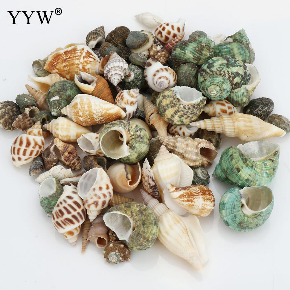 100pc/Bag Mixed Colorful Sea Shells Schelpen Coquillage Conchas Shell For Home Decoration Babylon Nautical Home Marine Decor
