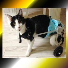 New Adjustable Pet Wheelchair Disabled Dog Old Dog Cat Assisted Walk Car Hind Leg Exercise Car For Dog/Cat Care(China)