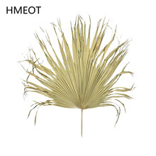 Palm Fan Leaf Dried Flower Natural Plants Leaves Window Reception Party Art Wall Hanging Decoration Wedding Arch Arrangement