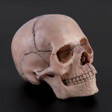15 ピース/セット 4D 分解頭蓋骨解剖モデル取り外し可能な医療教育ツール