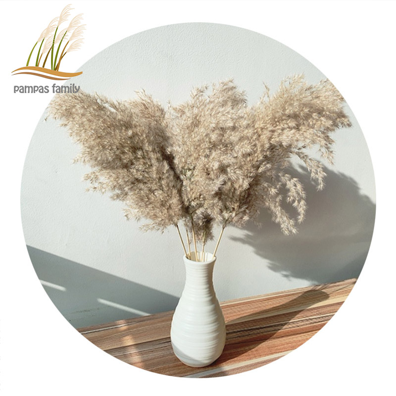1//2//5 bunches Natural Dried Flower Pampas Grass Cane Gray Large Layout J3F2