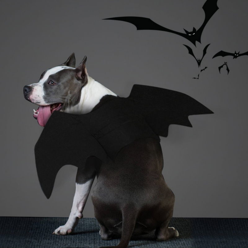 bat wings for dogs