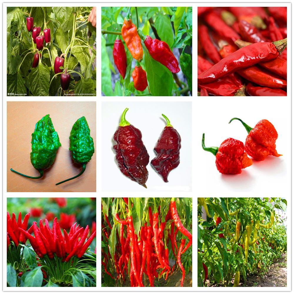 Plant Flower Bath Salts Hot Pepper Essence 100Pcs XZZ-227