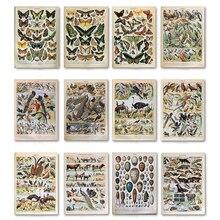 Mariposa pájaros Vintage póster e impresiones flores setas botánica impresiones educativos lienzo pared arte pintura cuadros