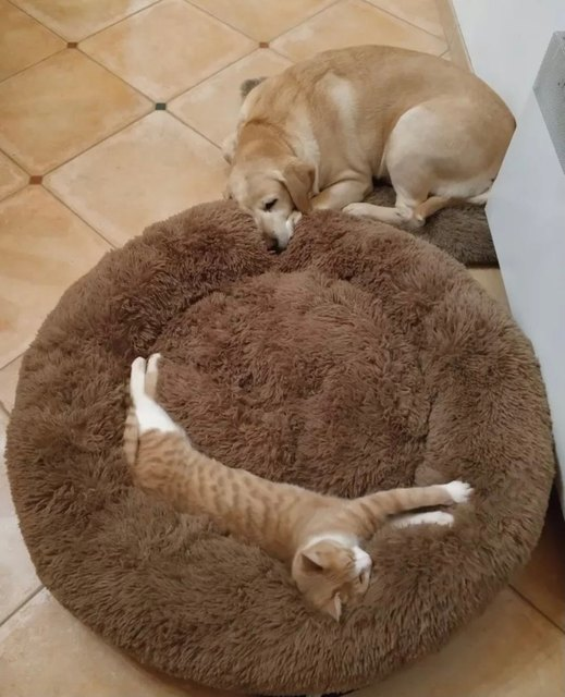 Soft Long Plush Best Pet Bed for Large Dogs Round Cat Cushion Mat  Animals Basket Sofa Pet Product Accessories Dropshipping 5