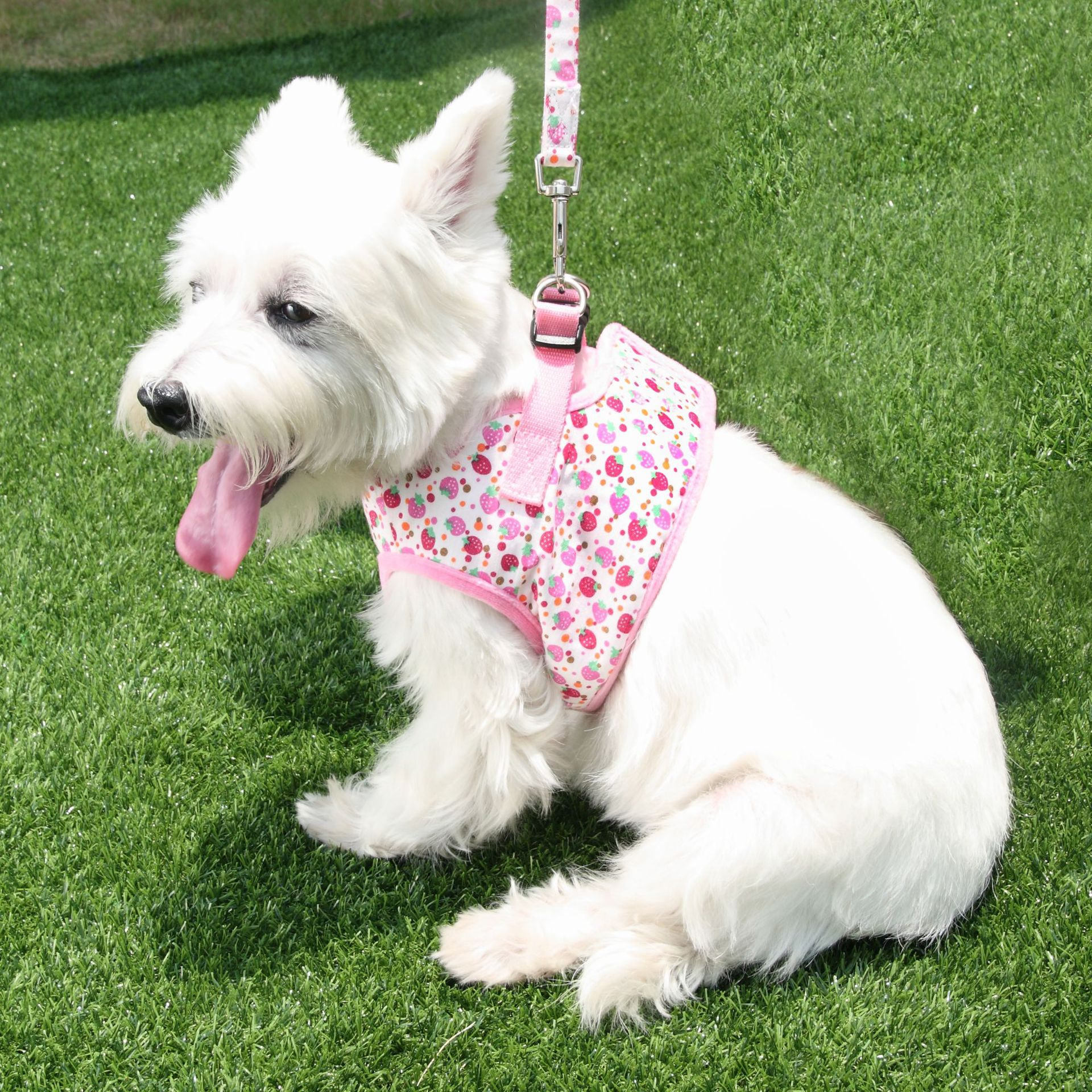 Japan Doogee Cute Strawberry Have Pet's Chest-back With Hand Holding Rope Dog Outdoor Traction Belt