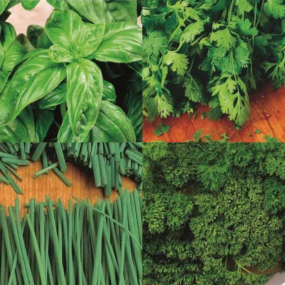 80pcs/set Vegetable Seeds Backyard Parsley Chives Seeds Garden Supplies
