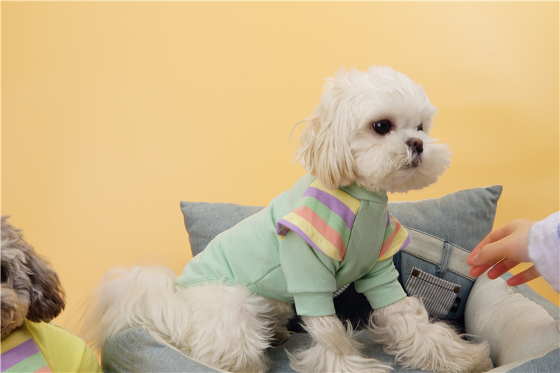 Cute small dogs clothes shirt (5)