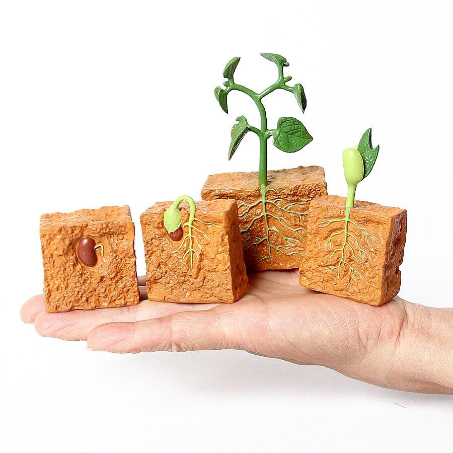 Имитация жизненного цикла зеленой фасоли, цикл роста растений, модель, экшн-фигурки, коллекция научные Развивающие игрушки для детей