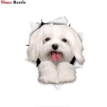 Três ratels 1057 3d cão adesivos bonitos malteses adesivos decalque crianças miúdo adesivos de parede