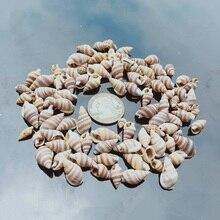 Home-Decor Aquarium Nautical Snail Conch-Shell Beach Fish-Tank Landscape Natural Mini