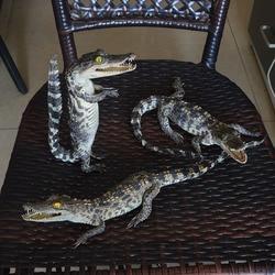 1 шт. Taxidermy, животные коллекционные маленькие украшения декор рукоделие фигурки и миниатюрный орнамент подарок
