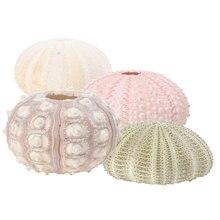 4 pçs criativo mar ouriço ornamentos tillandsia recipientes de cultivo diy vasos de plantio para casa loja escritório