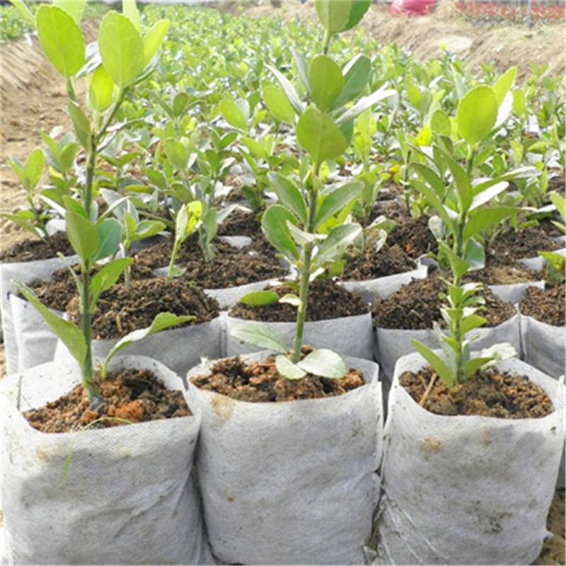 100pcs 8*10cm Biodegradable Non-woven Nursery Bags 10x12cm Plant Grow Bags Fabric Seedling Pots Eco-Friendly Aeration