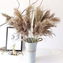 Flores secas reed nordic pampas reed cauda do cão grama ensolarada reed flores secas casa produtos de decoração 1pc