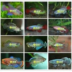 2020 solo mágico + água = peixes medaka killifish ovos animais vivos ovo de peixe crescente brinquedos ao vivo para crianças novidade 20 ovos/lote