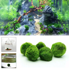 Marimo Moss Ball Aquarium Plant 4-5cm Green Landscape Pet Supplies Greening Round Shape Ornaments Decoration Beautiful